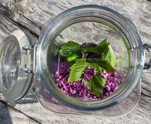 syrener i glas til hjemmelavet sodavand